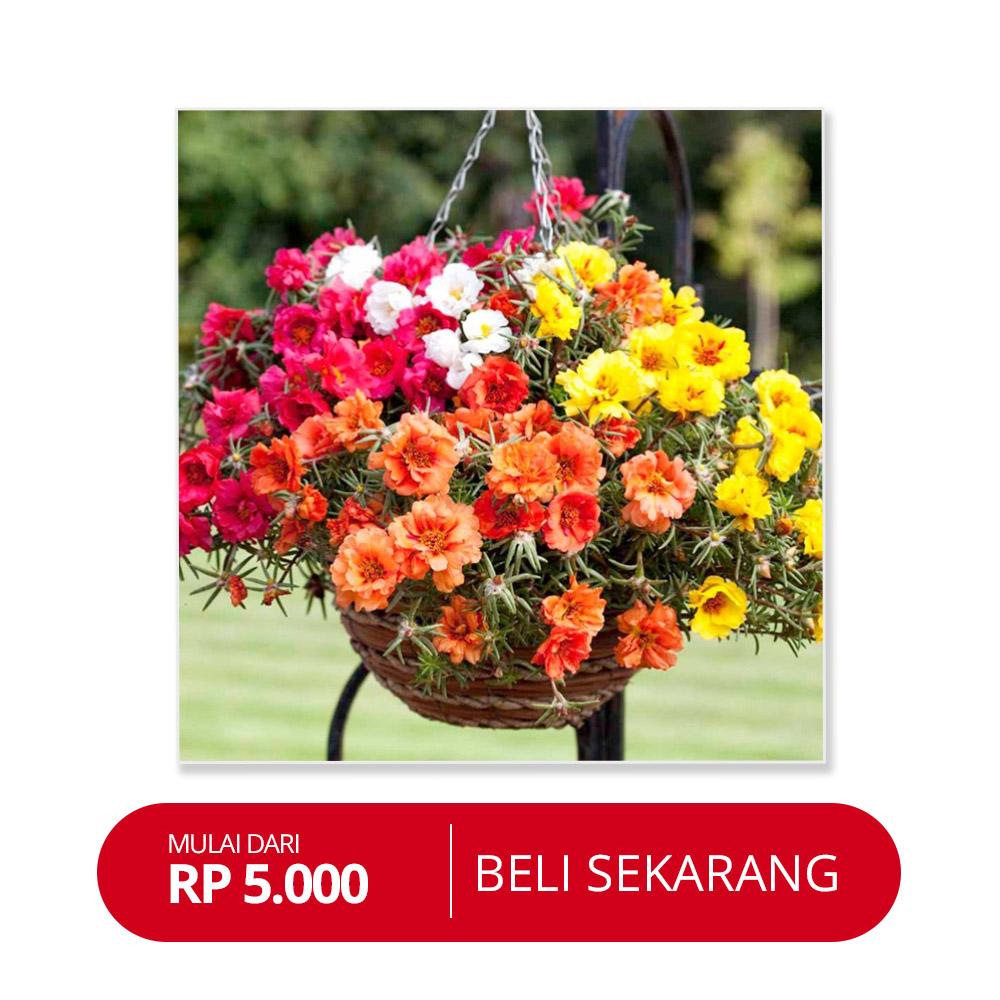 80+ Gambar Bunga Cantik Dan Mudah Terbaik