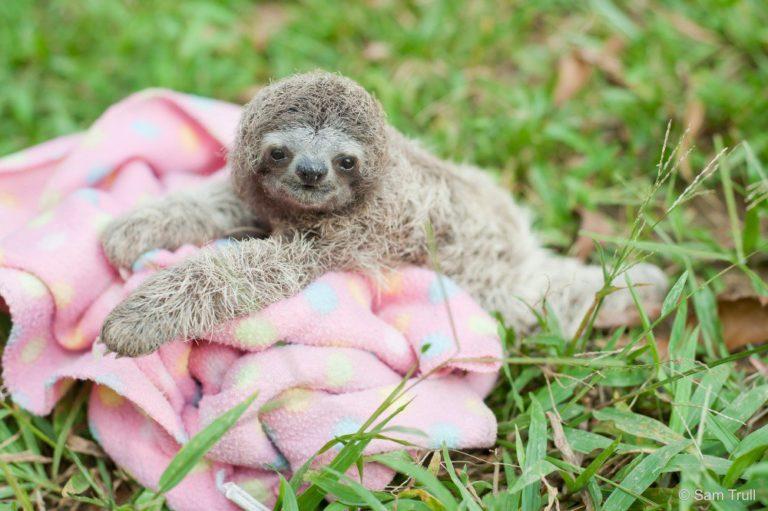 10 Bayi Binatang Menggemaskan Yang Siap Naikin Mood Kamu!