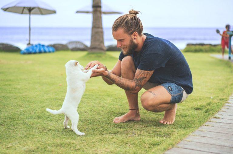 Kamu Pecinta Anjing atau Kucing? Cari tahu lewat Quiz ini ya!