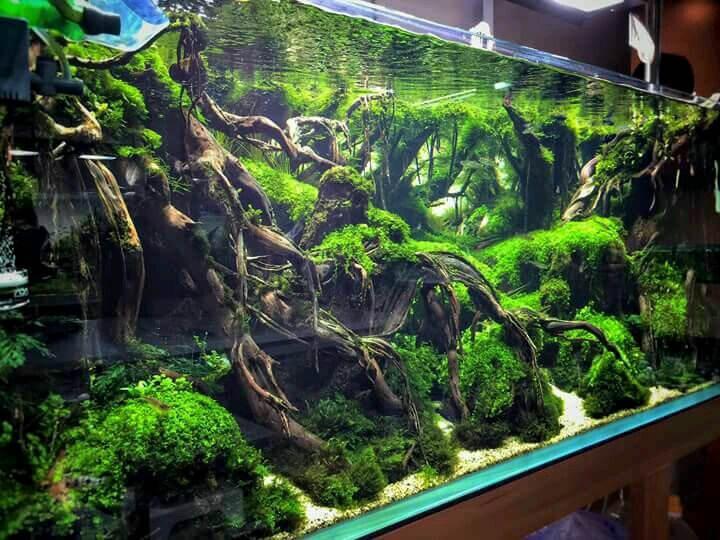 Memilih Lampu Aquascape yang Tepat untuk Pertumbuhan Tanaman Air