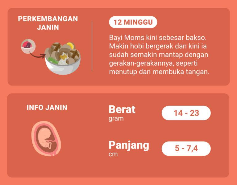 Di Usia Kehamilan 12 Minggu Ini, Bagaimana Perkembangan Janin Moms?
