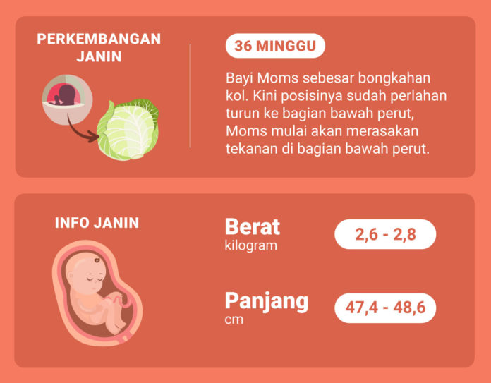 Hamil 36 Minggu