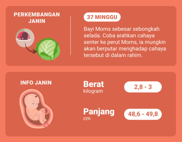 Hamil 37 Minggu