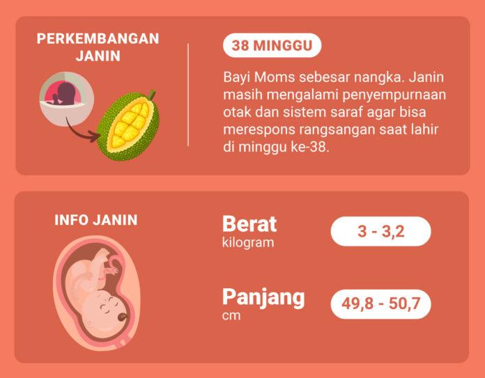 Hamil 38 Minggu