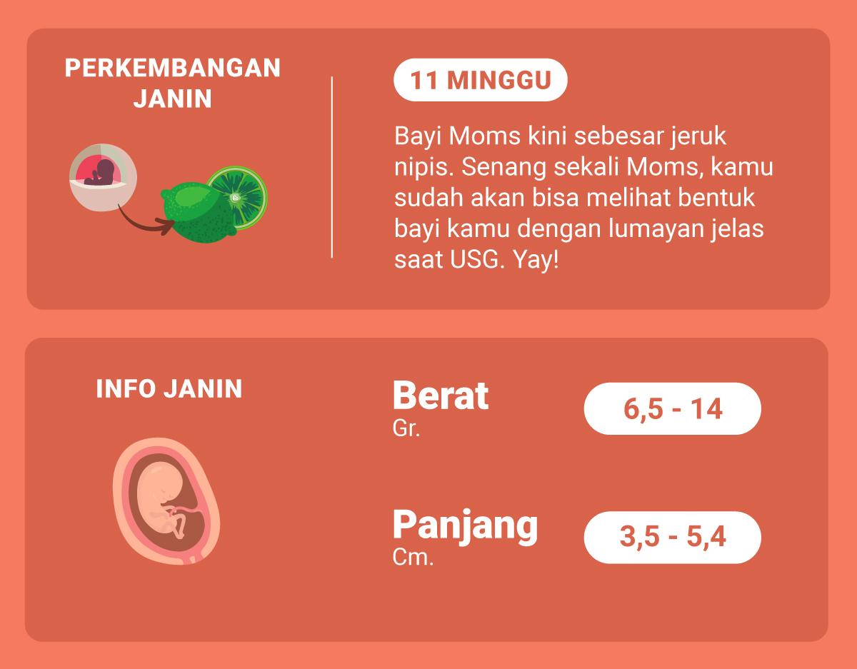 Di Usia Kehamilan 11 Minggu Ini Bagaimana Perkembangan Janin Moms Inspirasi Shopee