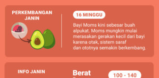 shopee moms club hamil 16 minggu perkembangan janin 16 minggu info kehamilan