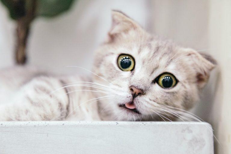 Kucing Kamu Cacingan? Ini Cara Mengenali Cirinya dan Mengobatinya!