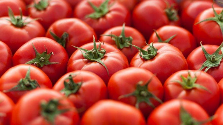 15 Manfaat Tomat yang Sangat Baik untuk Kesehatan