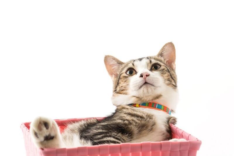 cara mengobati kucing cacingan
